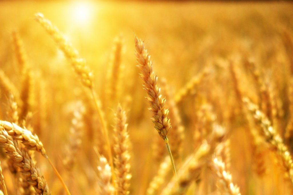 Fotowoltaika dla rolnictwa
